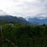 Weinberge Dolomiten